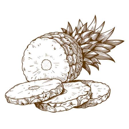 botanist: vector engraving illustration of pineapple slices on white background Illustration