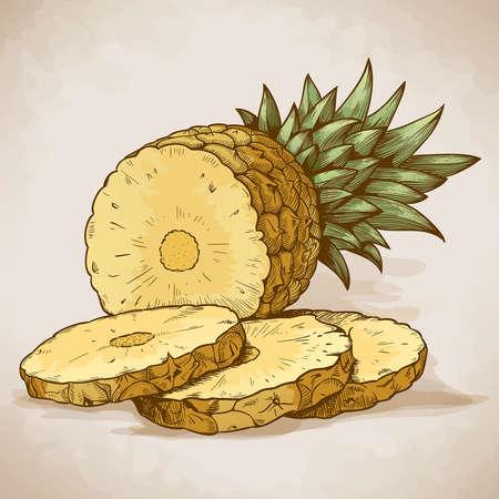 vector graveren illustratie van de ananasschijven in retro stijl
