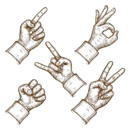 dattelpalme: Gravur Vektor-Illustration von f�nf H�nde auf Hintergrund