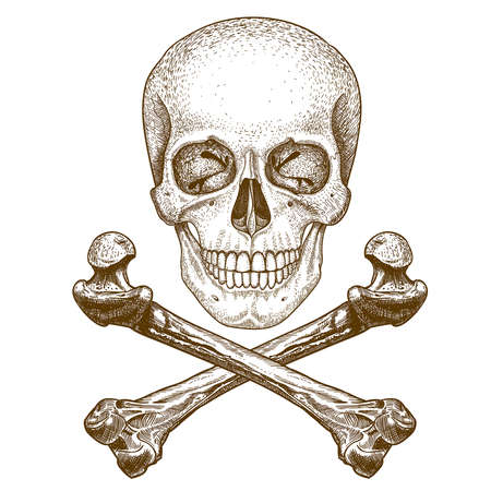 pirates flag design: vector engraving illustration of  skull and crossbones on white background