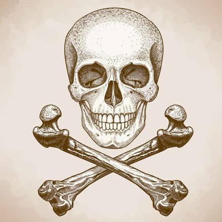 vector engraving illustration of  skull and crossbones on white background Vector