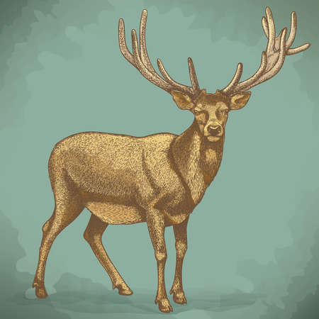 vector illustration of engraving reindeer in retro style Vector