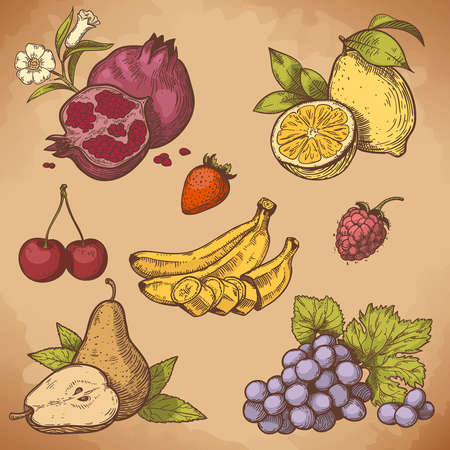 vector illustration of engraving sweet fruits and berries on the branch in retro style Çizim