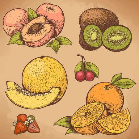 vector illustratie van graveren vruchten en bessen in retro stijl