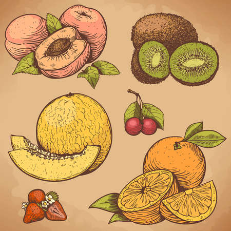 vector illustration of engraving fruits and berries in retro style Ilustração