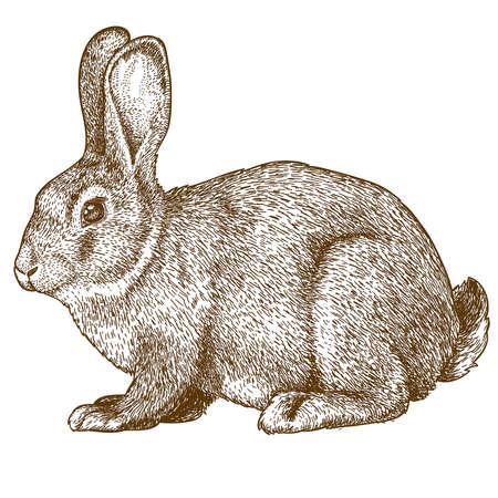 lijntekening: vector illustratie van het graveren konijn op witte achtergrond Stock Illustratie