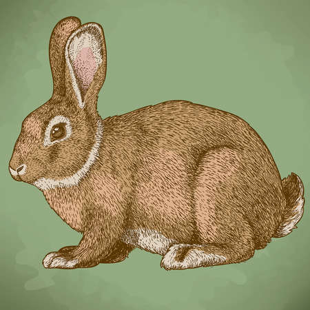 vector illustration of engraving rabbit in color