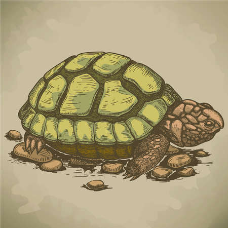 baby turtle: vector illustration of engraving turtle in retro style