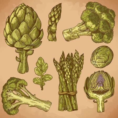 vector set van graveren illustratie groene groenten in retro stijl