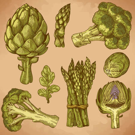 vector set of engraving illustration green vegetables in retro style