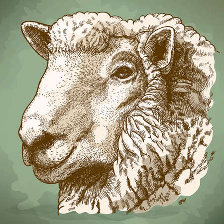 vector illustration of engraving head of sheep in retro style Vector