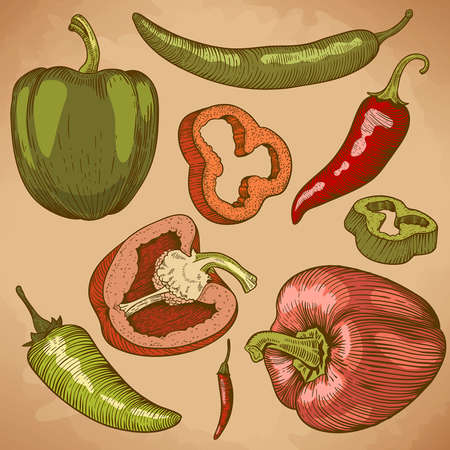 engraving vector illustration of many peppers in retro style