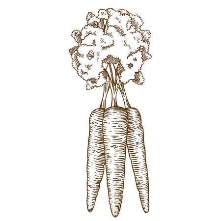 graveren vector illustratie van de wortel op een witte achtergrond Stock Illustratie