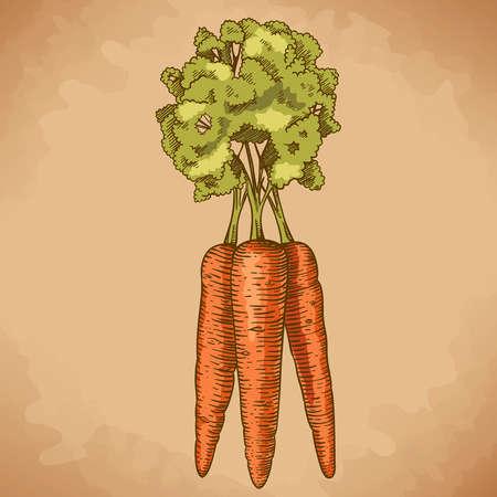 graveren vector illustratie van de wortel in retro stijl