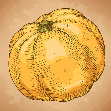 engraving vector illustration of yellow pumpkin in retro style Vector