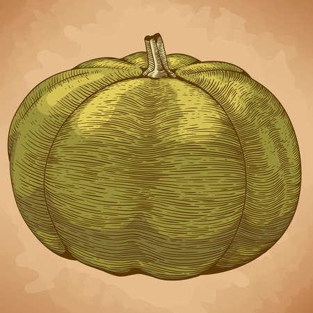engraving vector illustration of green pumpkin in retro style Stock Illustratie