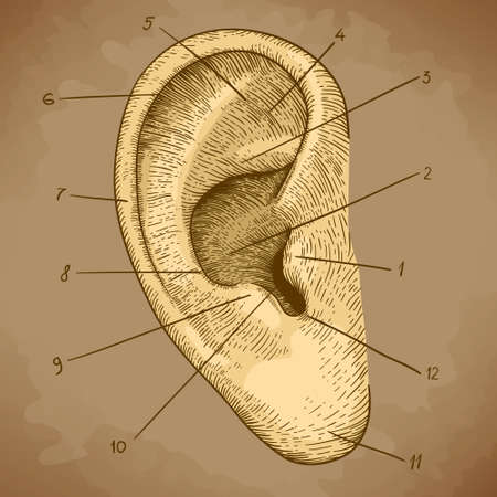 vector illustration of engraving human ear in retro style Vector