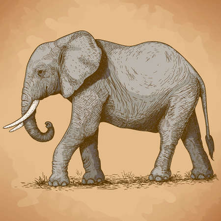 snouts: vector illustration of engraving elephant in retro style