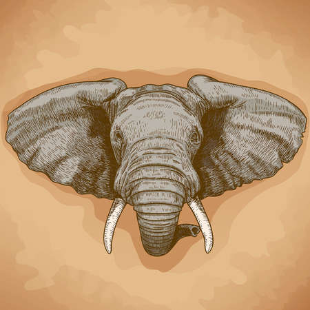 vector illustration of engraving elephant head in retro style