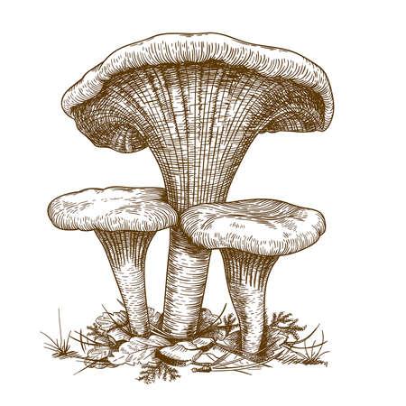 engraving vector illustration of three mushrooms