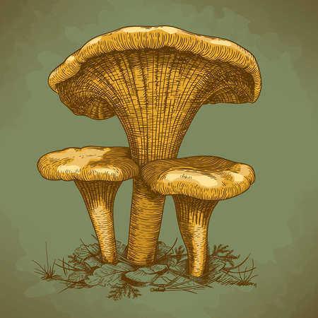 mycology: engraving vector illustration of three mushrooms in retro style