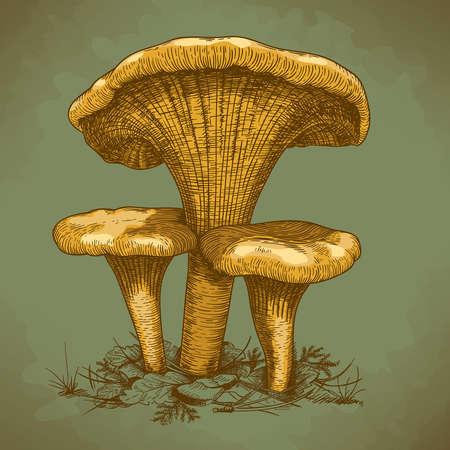 engraving vector illustration of three mushrooms in retro style