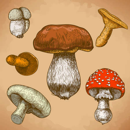engraving illustration of mushrooms in retro style Ilustração