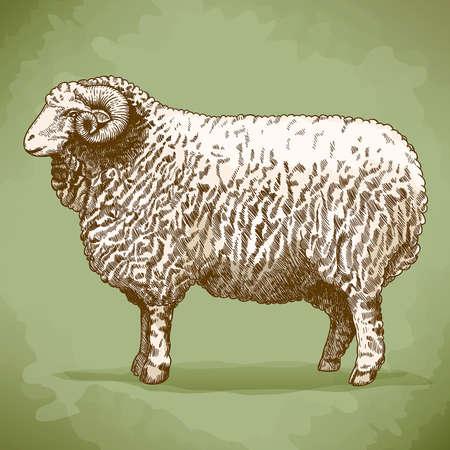 illustration of engraving ram in retro style