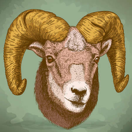 illustration of engraving ram head in retro style Vector