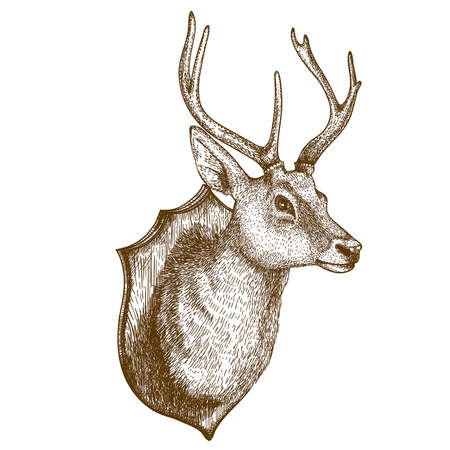 Antique print of a reindeer head isloated on white background Stock Illustratie