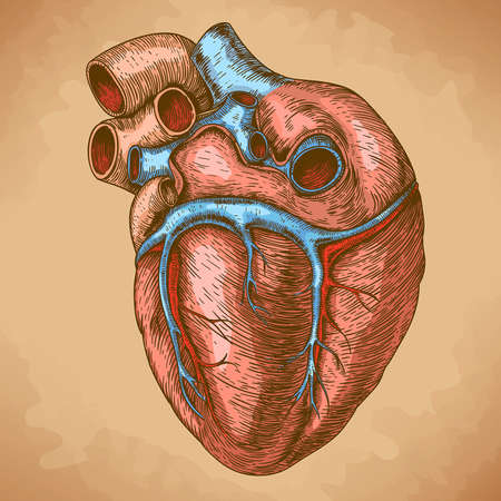 illustration of engraving heart in retro style Vector