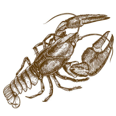 Vector antique engraving woodcut illustration of one crayfish on white background Vettoriali