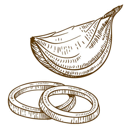 graveren antieke vector illustratie van de plakjes ui geïsoleerd op witte achtergrond
