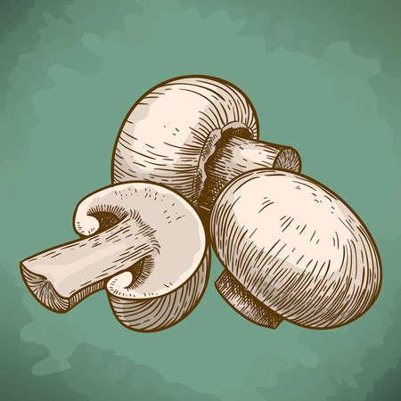 edible mushroom: engraving vector illustration of tree mushrooms champignons in retro style