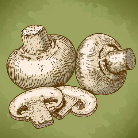 mycology: engraving vector illustration of champignons in retro style