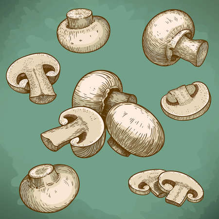 mycology: engraving vector illustration of mushrooms champignons in retro style