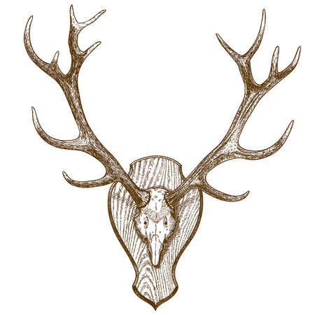 Vector engraving illustration of animal skull with horns isolated on white background Illustration