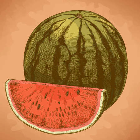 watermelon: Vector engraving illustration of highly detailed hand drawn watermelon and slice in retro style