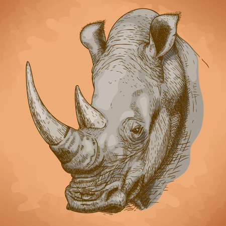 animal nose: Vector engraving antique illustration of rhinoceros head in retro style Illustration