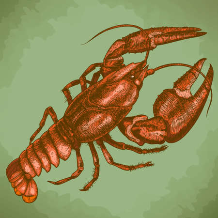 Vector antique engraving woodcut illustration of one crayfish in retro style
