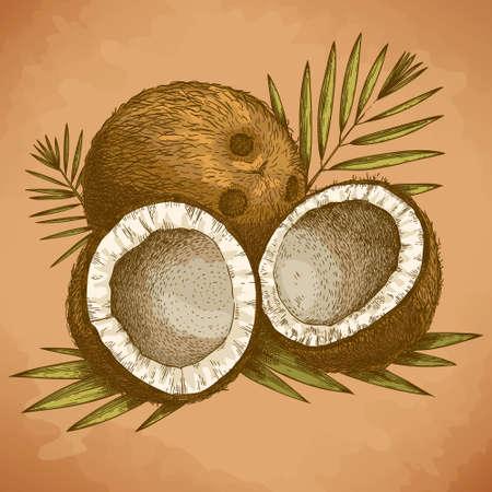 coco: Vector grabado ilustración de alto nivel de detalle de coco y hojas de palmeras en estilo retro