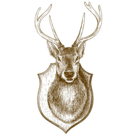 Vector engraving antique illustration of stuffed reindeer head isloated on white background Imagens - 47262744