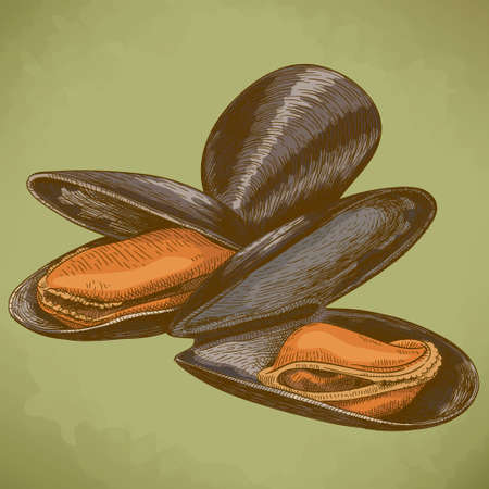 mussel: Vector engraving illustration of highly detailed hand drawn mussel in retro style
