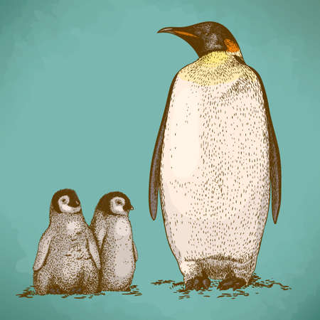 engraved image: Engraving antique illustration of king penguin and two penguin nestling in retro style Illustration