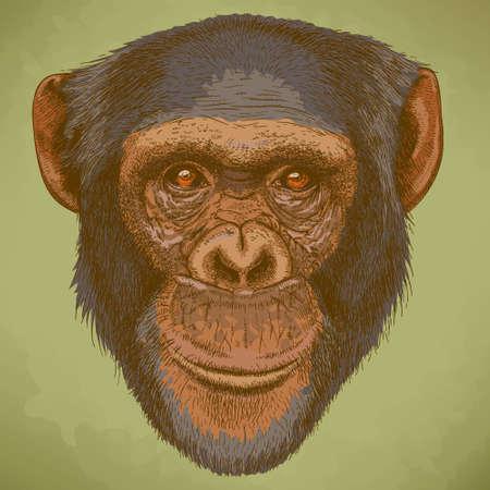 Vector graveren illustratie van zeer gedetailleerde hand getrokken hoofd van de chimpansee in retro stijl Stock Illustratie