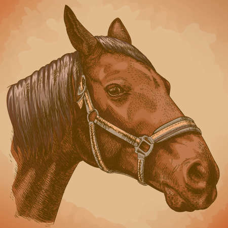 rein: Vector engraving illustration of highly detailed hand drawn horse head in retro style