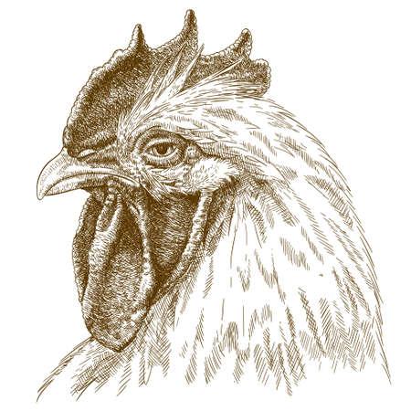 Vector antieke gravure illustratie van haan hoofd geïsoleerd op een witte achtergrond