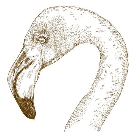 antique engraving illustration of flamingo head isolated on white background
