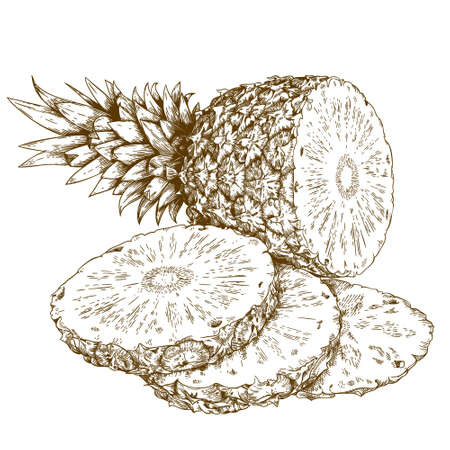 dieting: antique engraving illustration of pineapple and slices isolated on white background Illustration