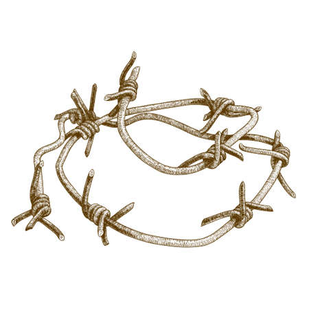 razor wire: Vector antique engraving illustration of barbed wire isolated on white background